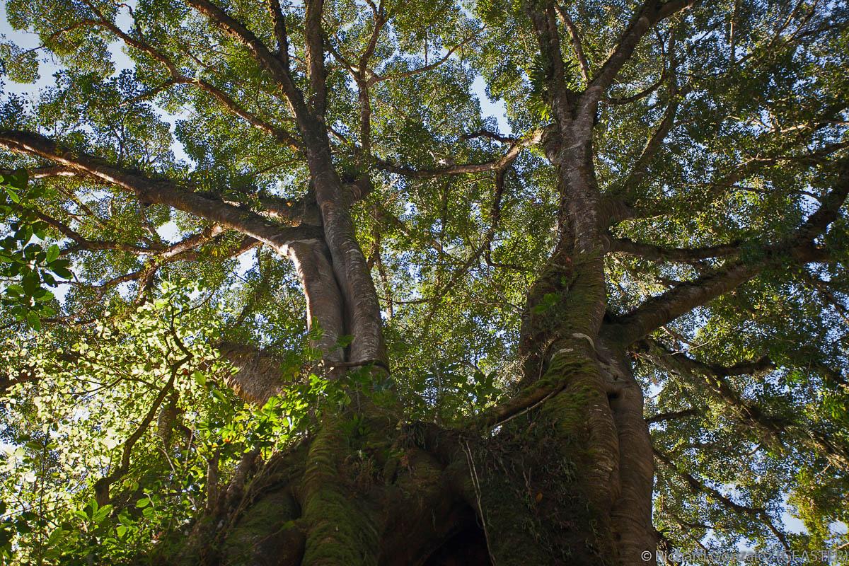 forêt primaire à Bali