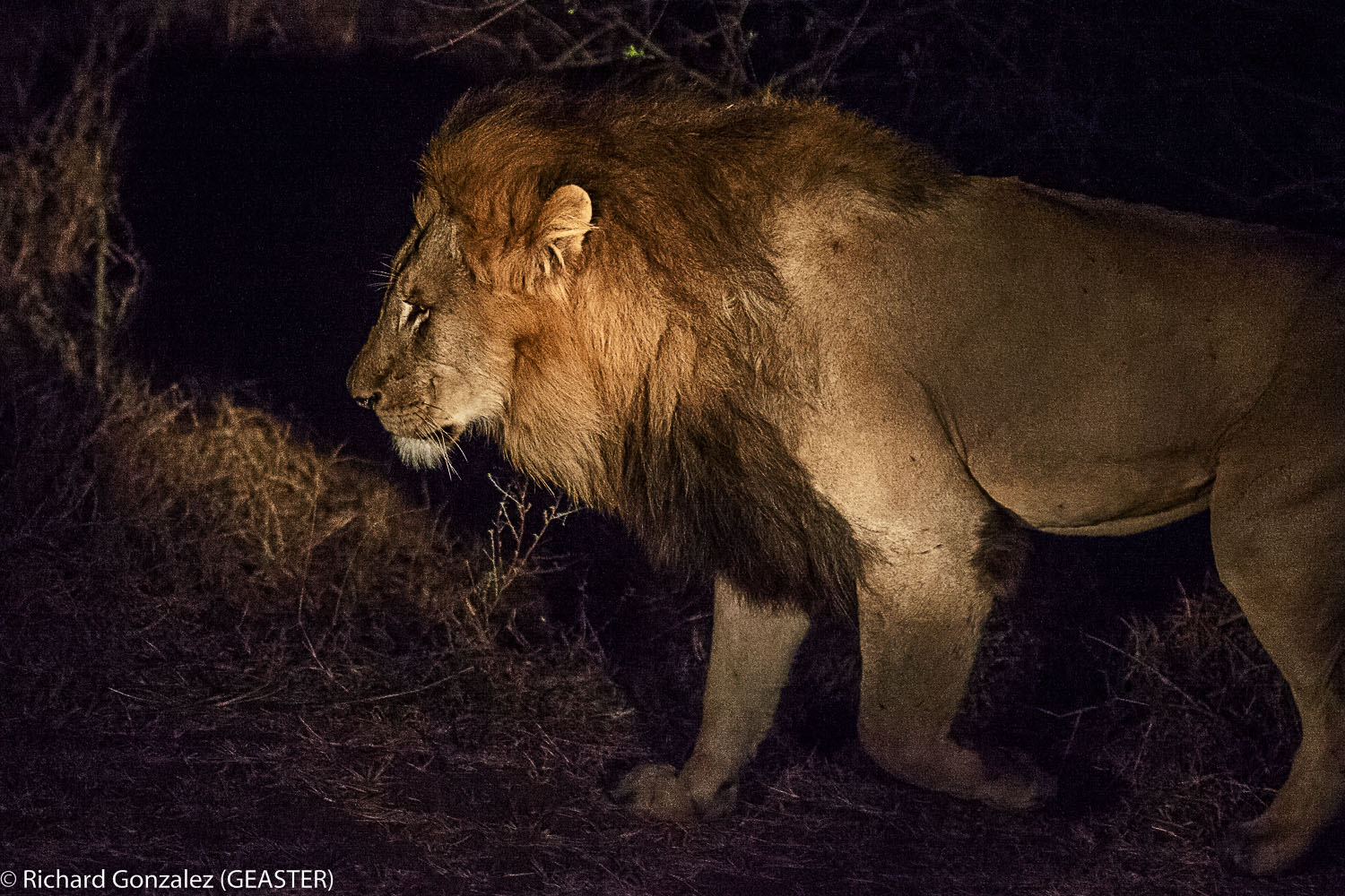lion lower sabie