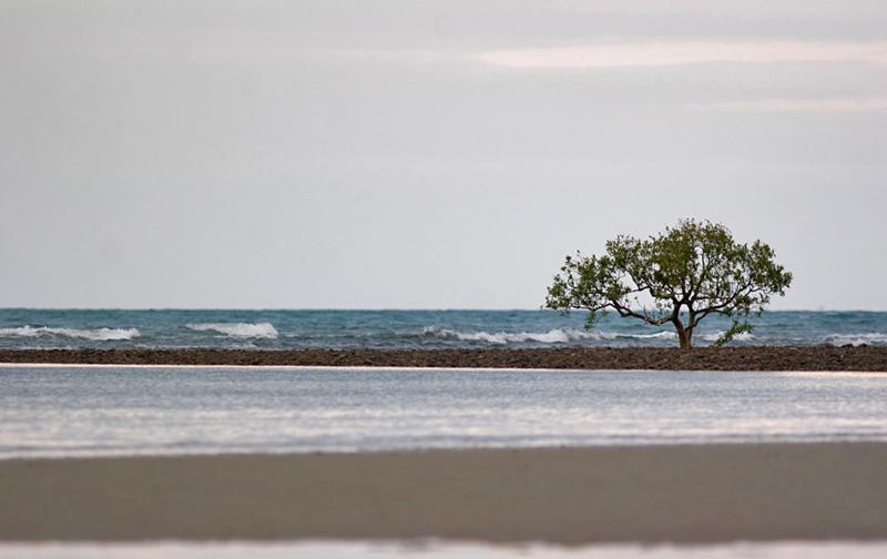 l'arbre dans la mer