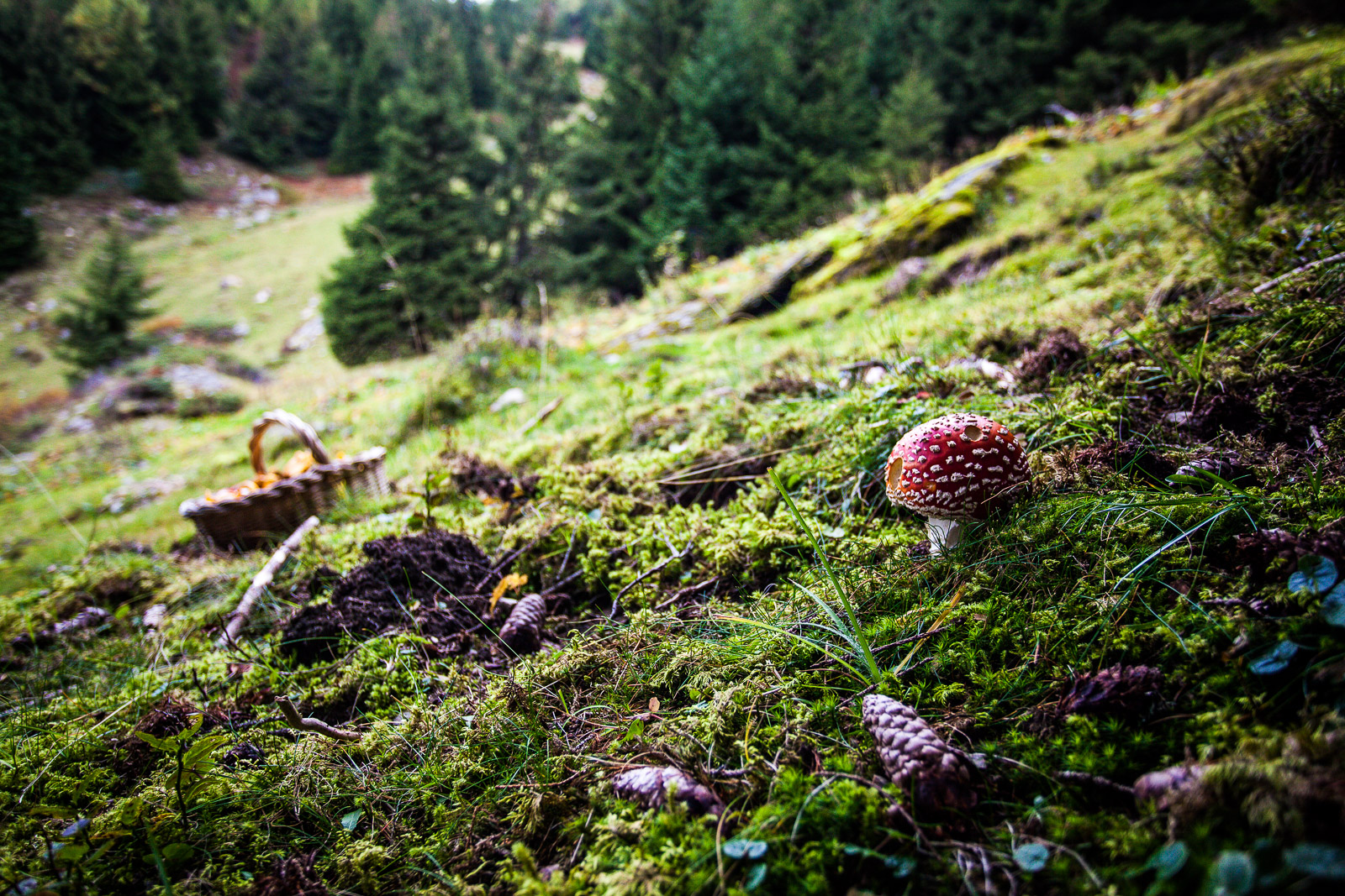 promenade au temps des champignons