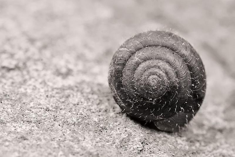 spirale copy