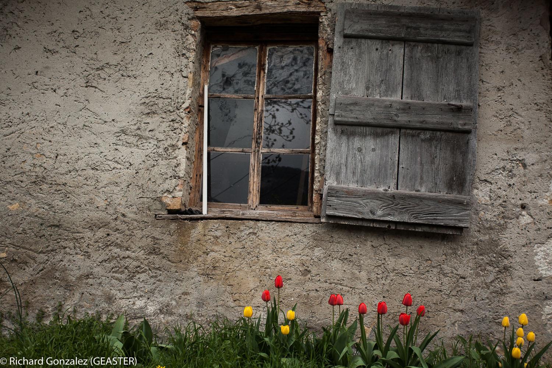 portrait de vieille dame au printemps